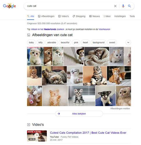 Google zoeken naar schattige katten